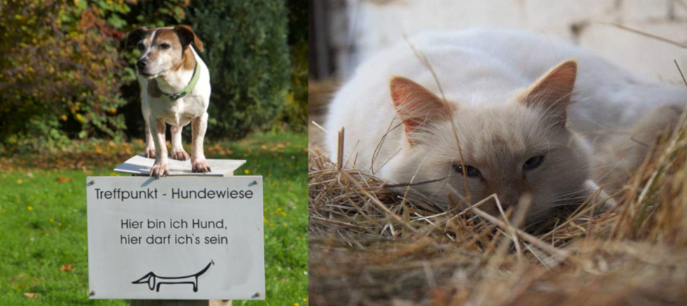 Tierarztpraxis-an-der-ILL-Tierrzte-Illingen-Saarland