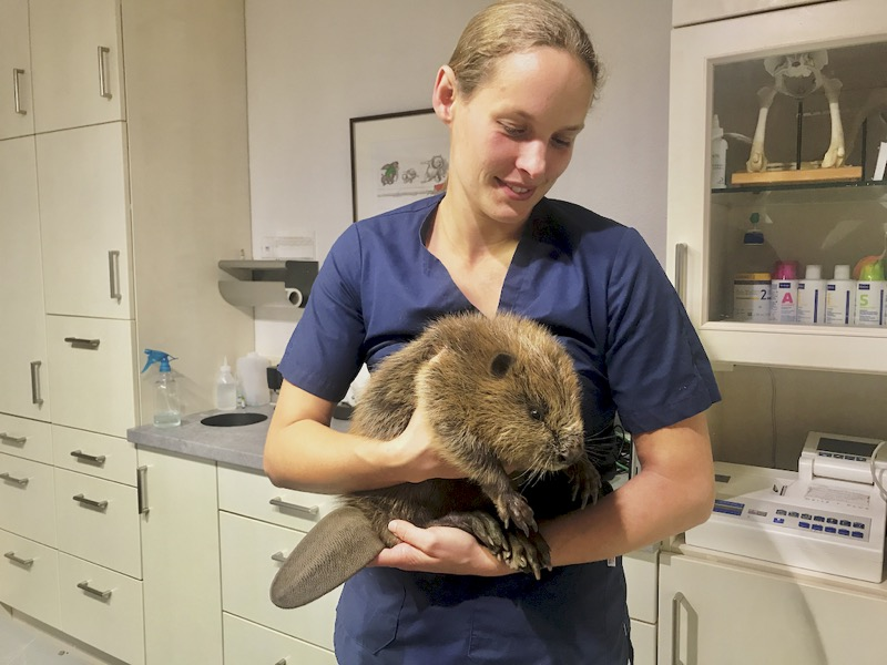 Biber Baby beim Tierarzt in Illingen Saarland Tierarztpraxis an der ILL