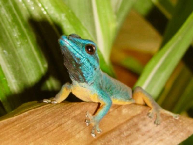 Gecko Reptilien Tierarzt Illingen Saarland