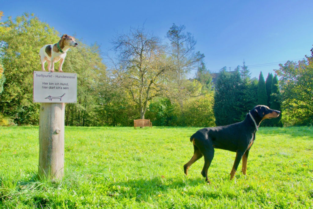 Hundewiese Tierarzt Illingen Saarland Tierarztpraxis an der ILL