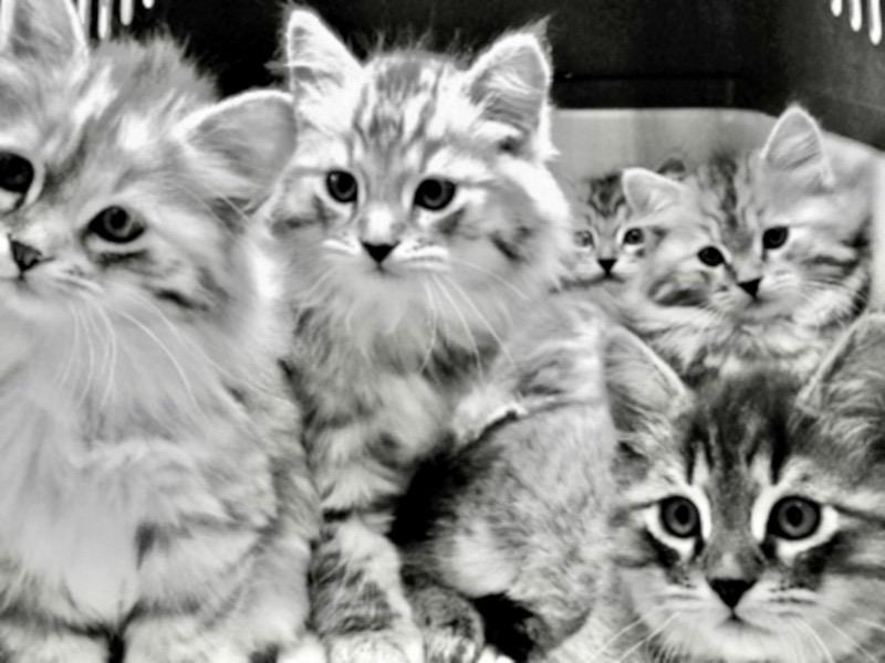 Impfung von Katzenbabys beim Tierarzt in Illingen Saarland