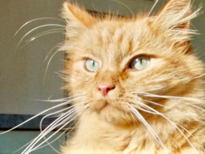 Katze beim Tierarzt Illingen Saarland