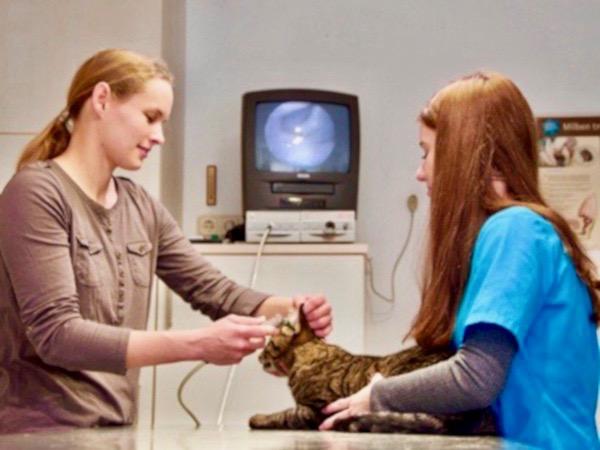 Videoskopie Tierarzt Illingen Saarland Tierarztpraxis an der ILL